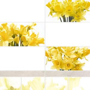 VOX Narciss monohrom