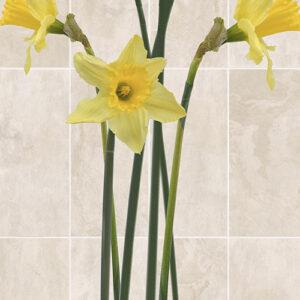 VOX Narciss yellow